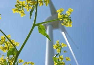 Günstiger Strom der Stadtwerke Wolmirstedt